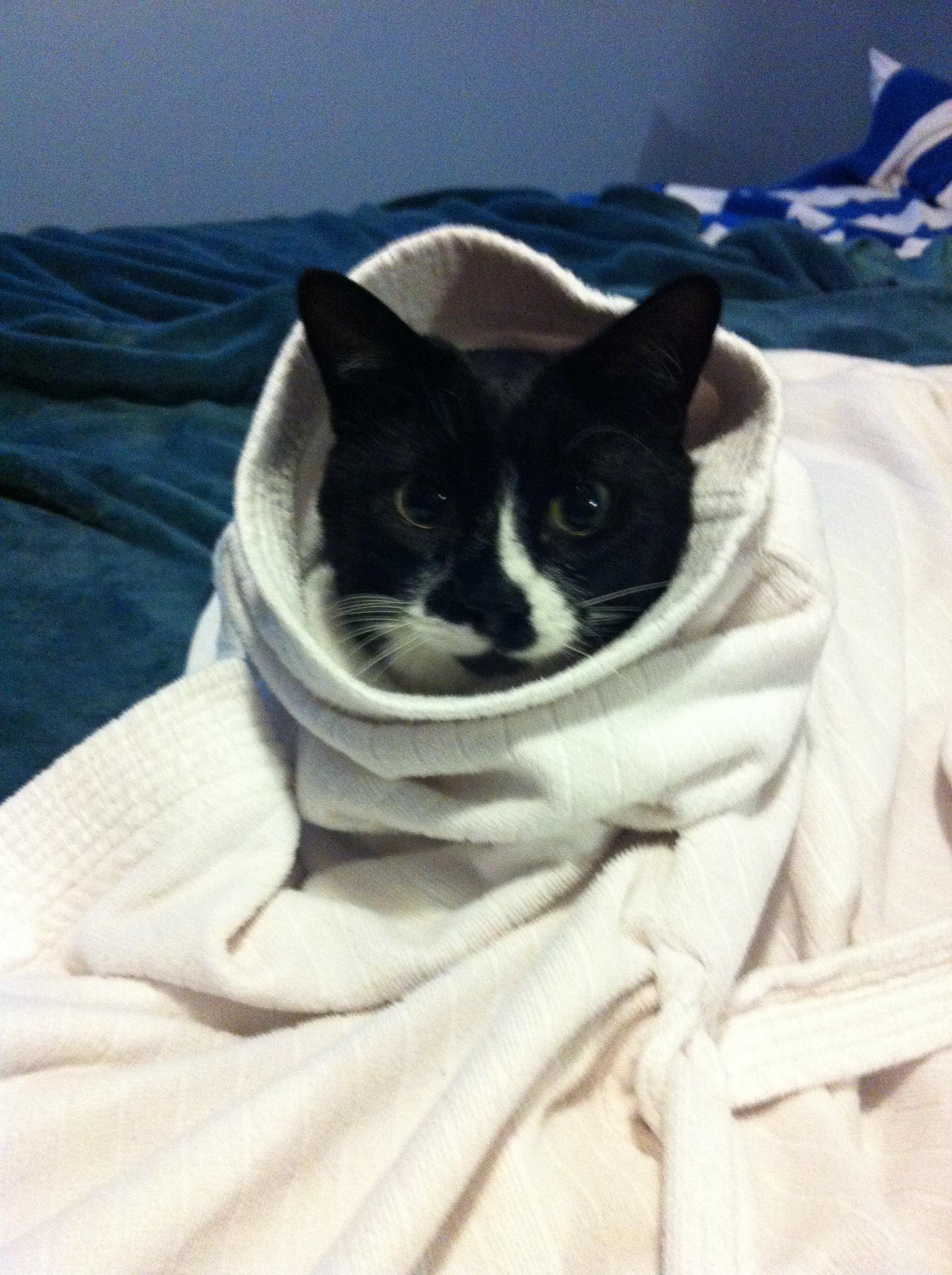 tippy in my robe