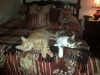 kramer and arena sleeping