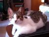 amigo on table