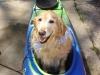 gracie-in-kayak